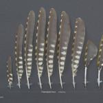 hackspettar-grongoling-1