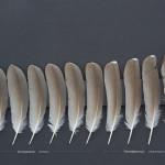 storkfaglar-natthager-1