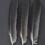 storkfaglar-hager-1