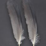 storkfaglar-hager-2