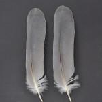storkfaglar-hager-3