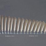 tattingar-tradgardssangare-1