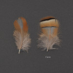honsfaglar-klipphona-1