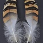 storkfaglar-stortrapp-1
