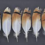 storkfaglar-stortrapp-4