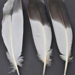 storkfaglar-stortrapp-5