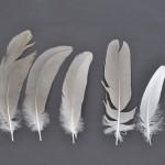 storkfaglar-prarietrana-2