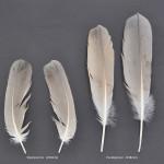 storkfaglar-prarietranal-1
