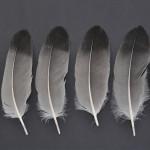 storkfaglar-trana-1