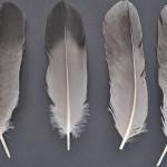 storkfaglar-trana-2