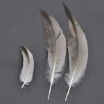 storkfaglar-trana-5