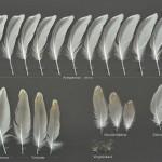 vadare-silvertarna-10