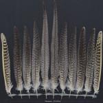 papegojfaglar-nymfparakit-2