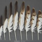 rovfaglar-fjallvrak-16