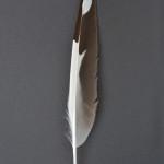 masarochtrutar-silvertarna-1