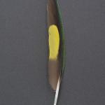papegojfaglar-kokoslorikit