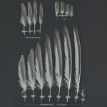vadare-fisktarna-1