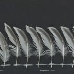 vadare-fisktarna-2